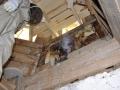 Mesilaspere pidime kellatorni seinast välja kolima. Mesinik: Tiit Toomel. Foto: Andres Uus.