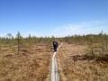 Visit to wetland