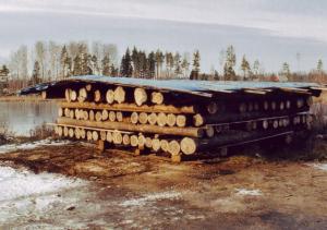 Kooritud ehituspalk looduslikult kuivamas ajutise varikatuse all.